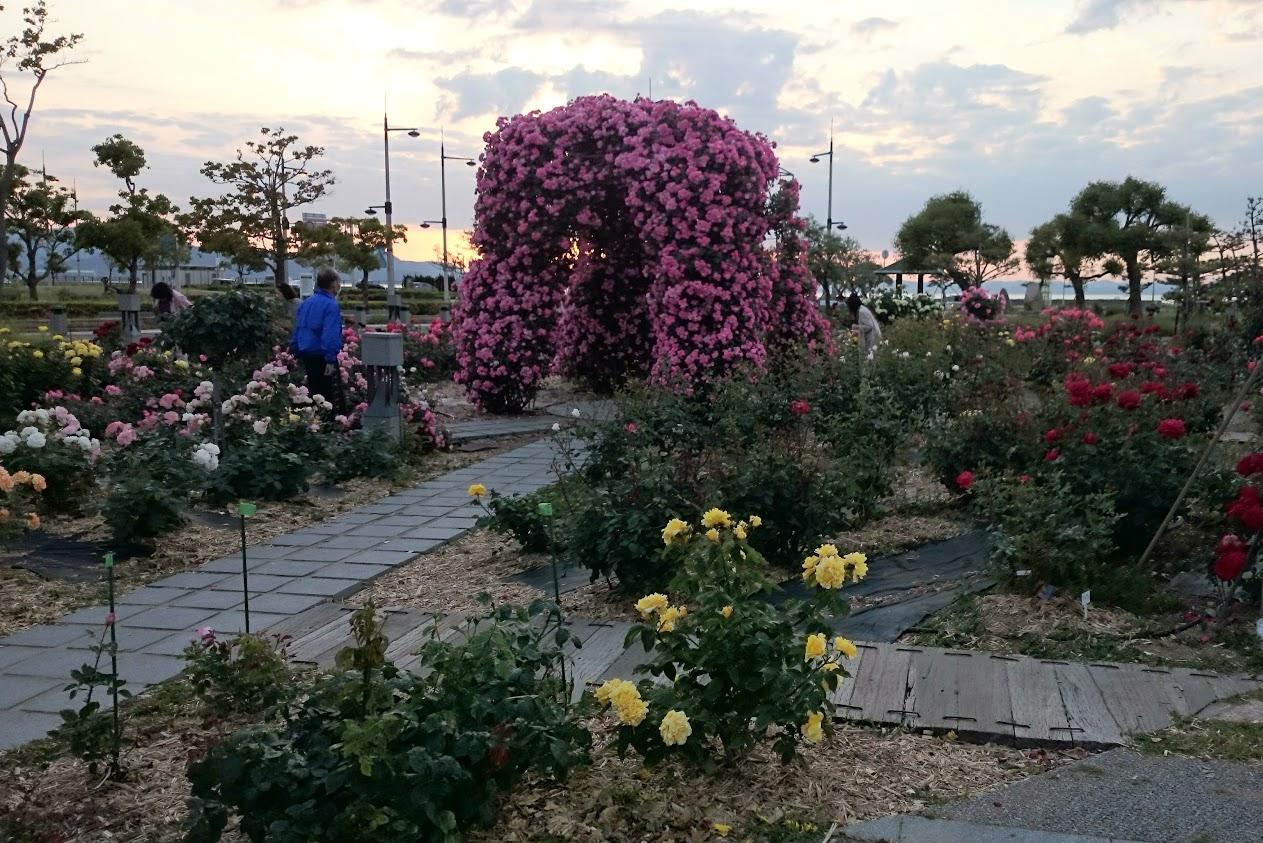 サンポートバラ園 薔薇のアーチ