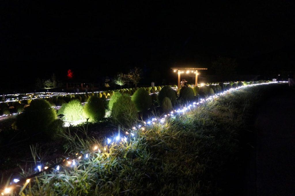 まんのう公園コキアライトアップ花巡りの丘のベンチ