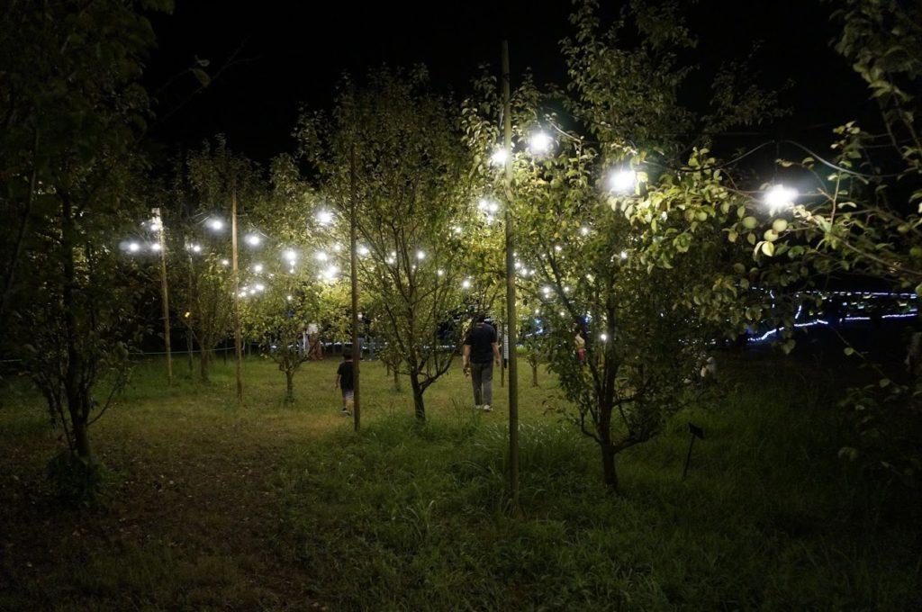 まんのう公園ライトアップ実りの丘