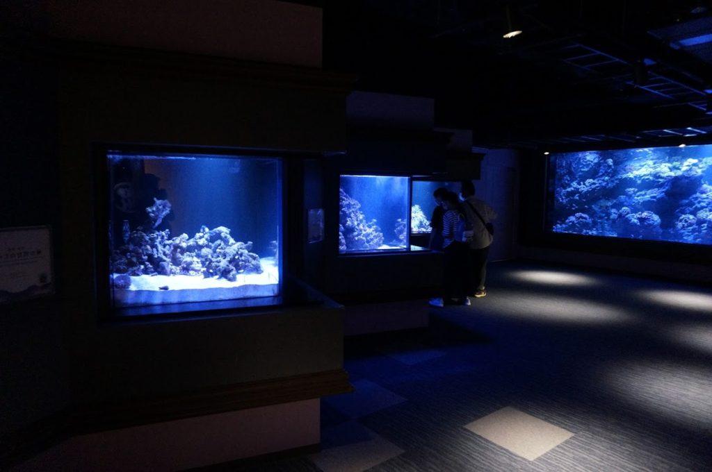 四国水族館太平洋ゾーン