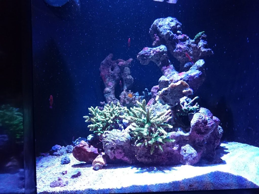 四国水族館サンゴの世界の景ホンソメワケベラ