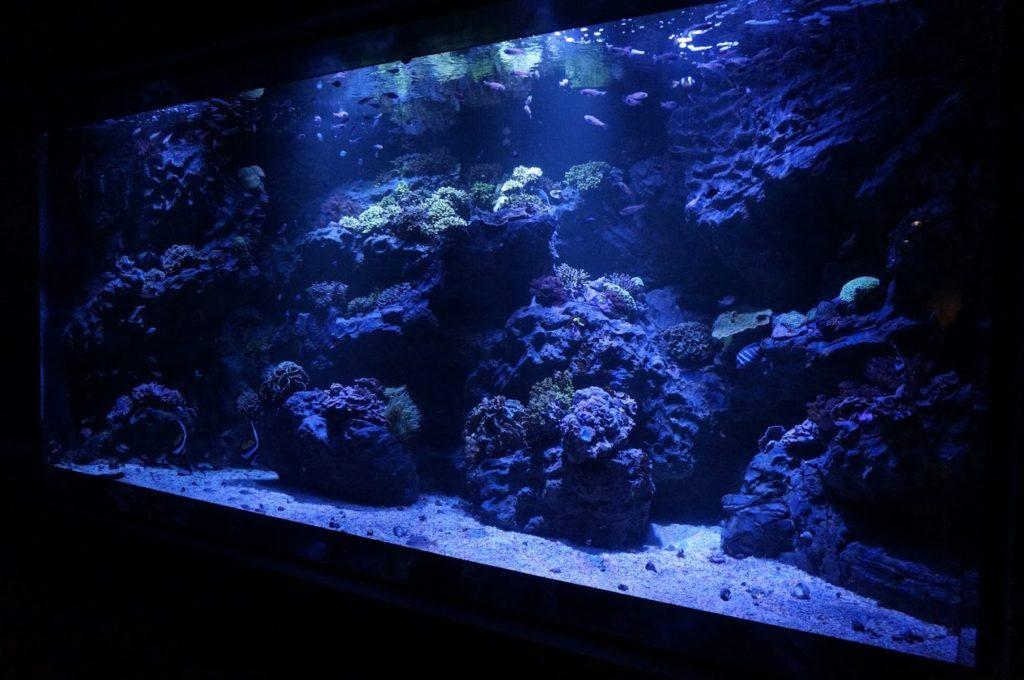 四国水族館 造礁サンゴの景 ミドリイシ
