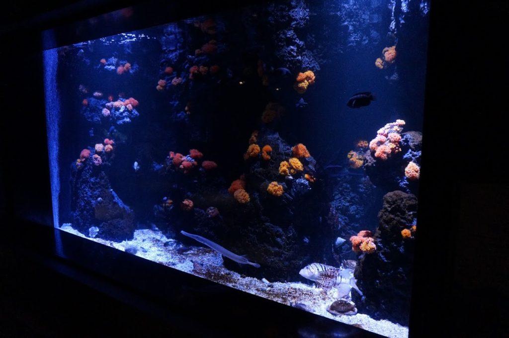 四国水族館 海中のお花畑ヤギ類