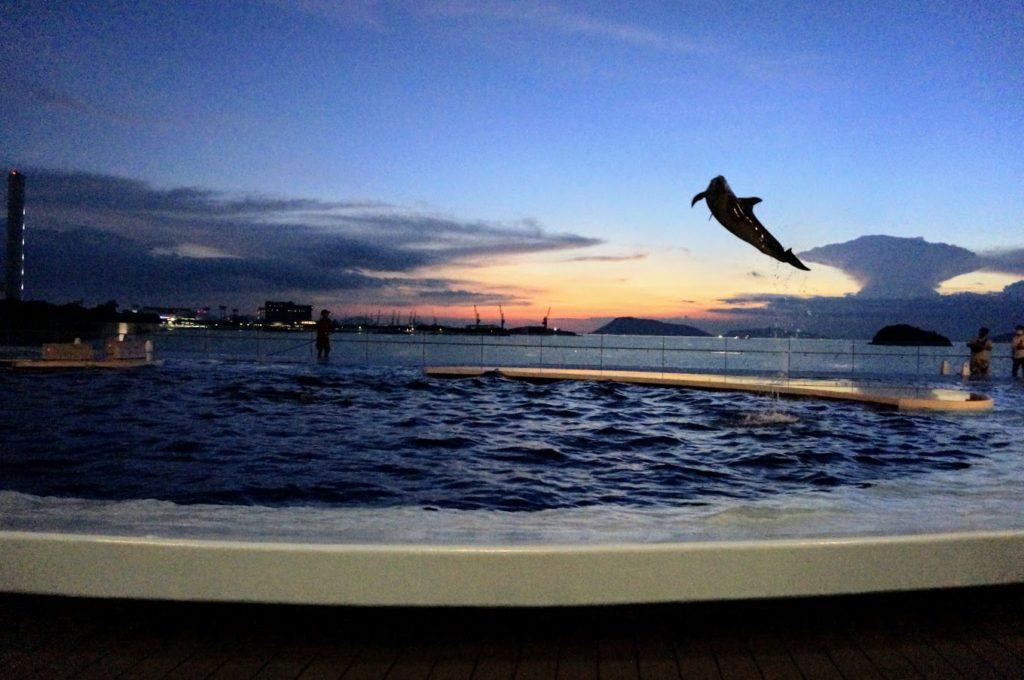 四国水族館 日没後の海豚プール