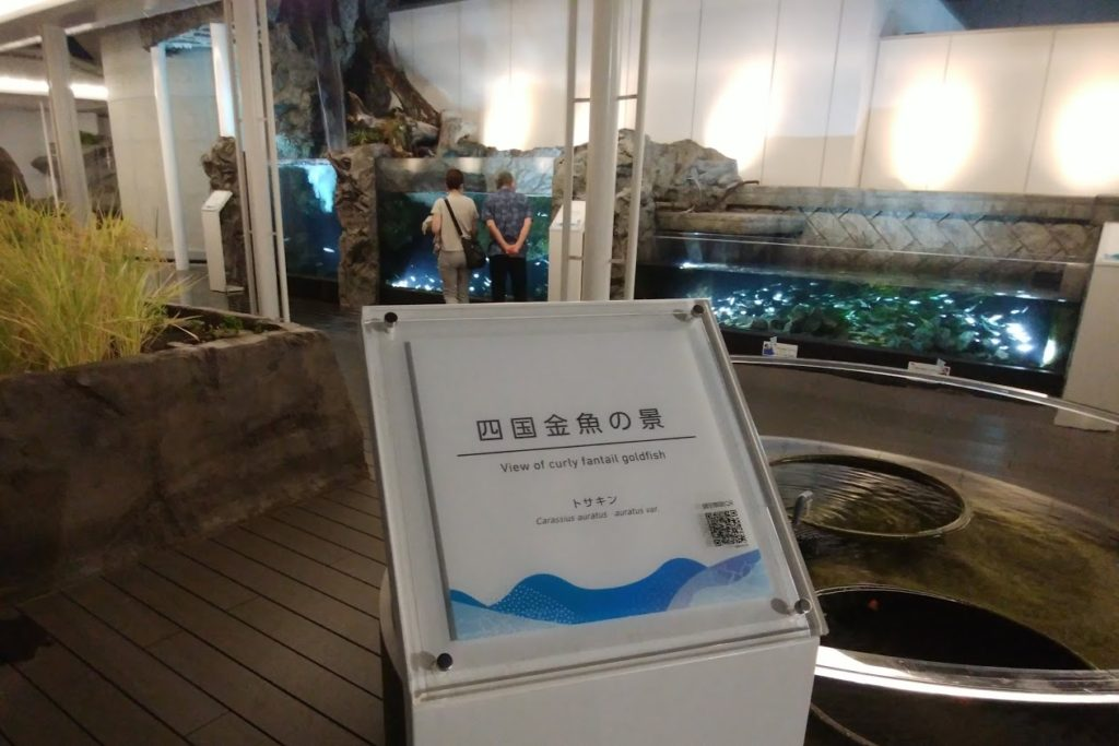 四国水族館 淡水ゾーン 四国金魚の景