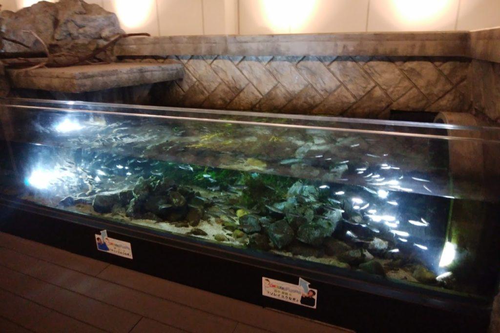 四国水族館 淡水ゾーン 石倉の景