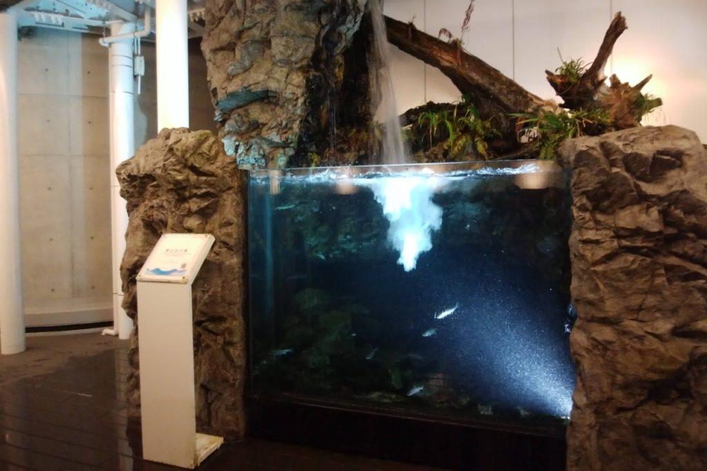 四国水族館 淡水ゾーン 魚止めの景