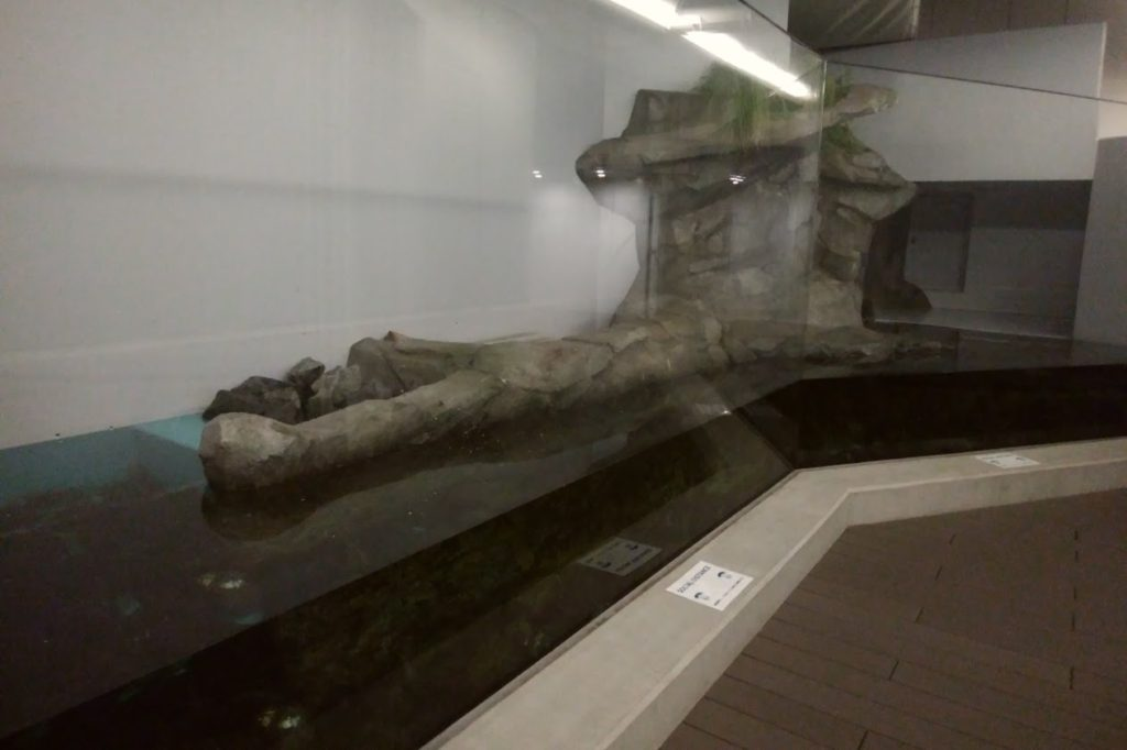 四国水族館 淡水ゾーン 川獺がいた景