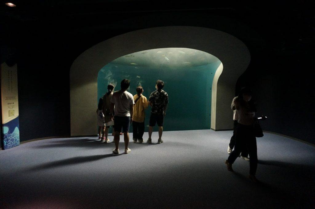 四国水族館 渦潮の景の前