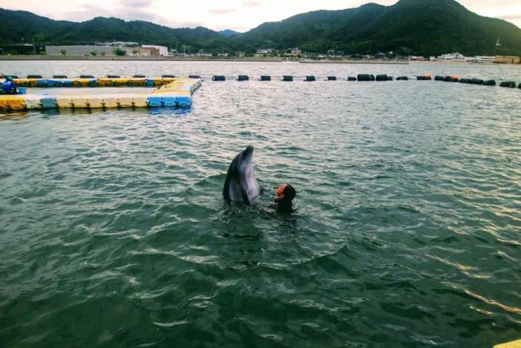 日本ドルフィンセンターイルカとトレーナー