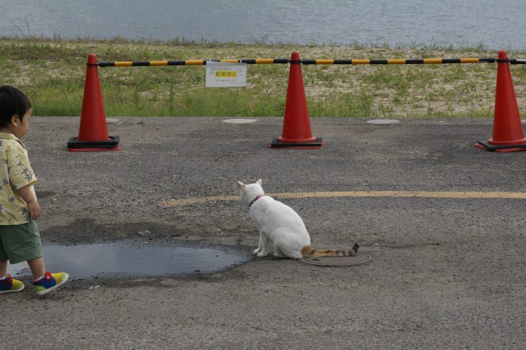 日本ドルフィンセンターの猫