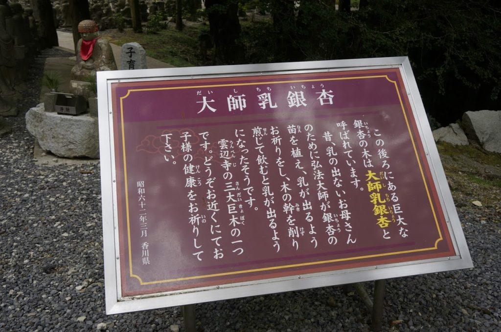 雲辺寺大師乳銀杏