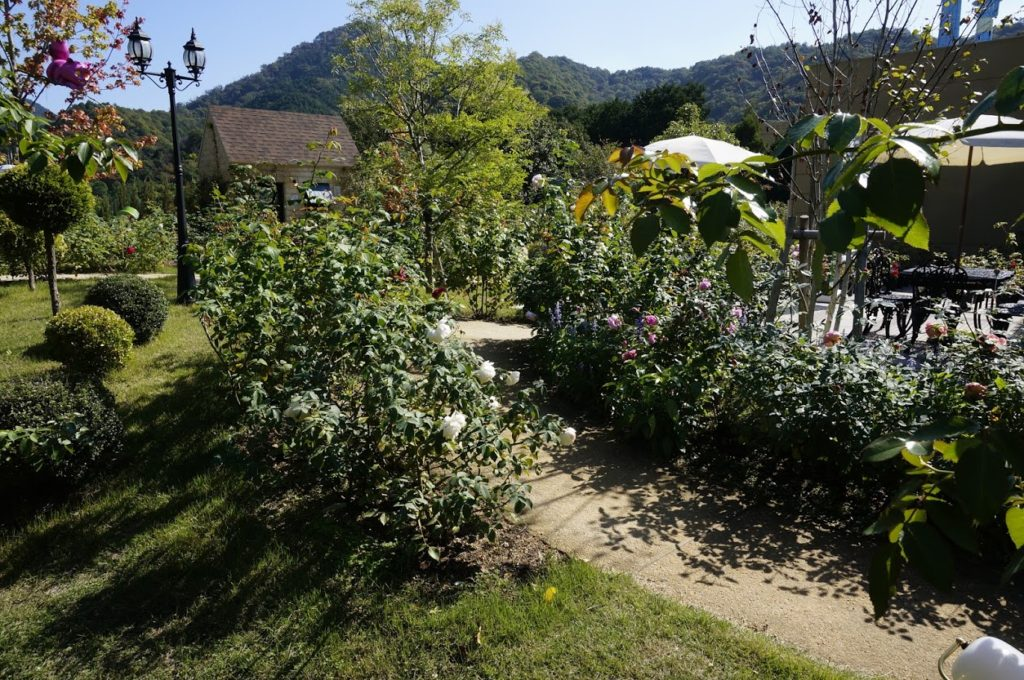 レオマオリエンタルトリップ秋の大バラまつりアリスイングリッシュローズガーデン