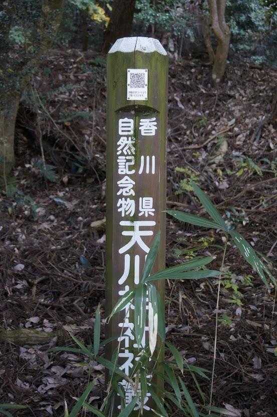 香川県自然記念物天川神社
