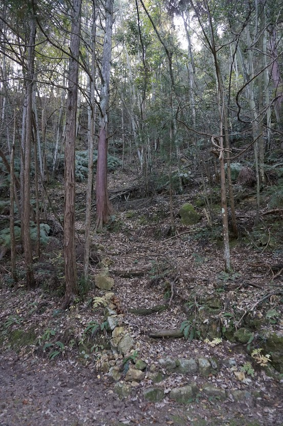天川神社社叢