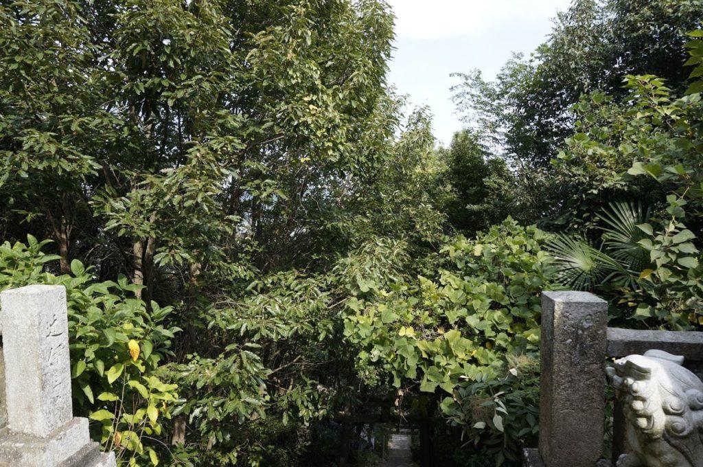 讃岐十景汐木山荒魂神社への石段の上