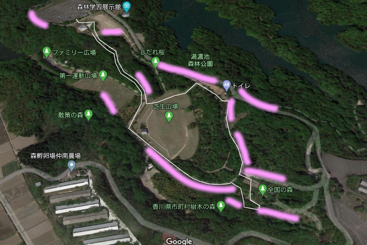 満濃池森林公園の桜の場所