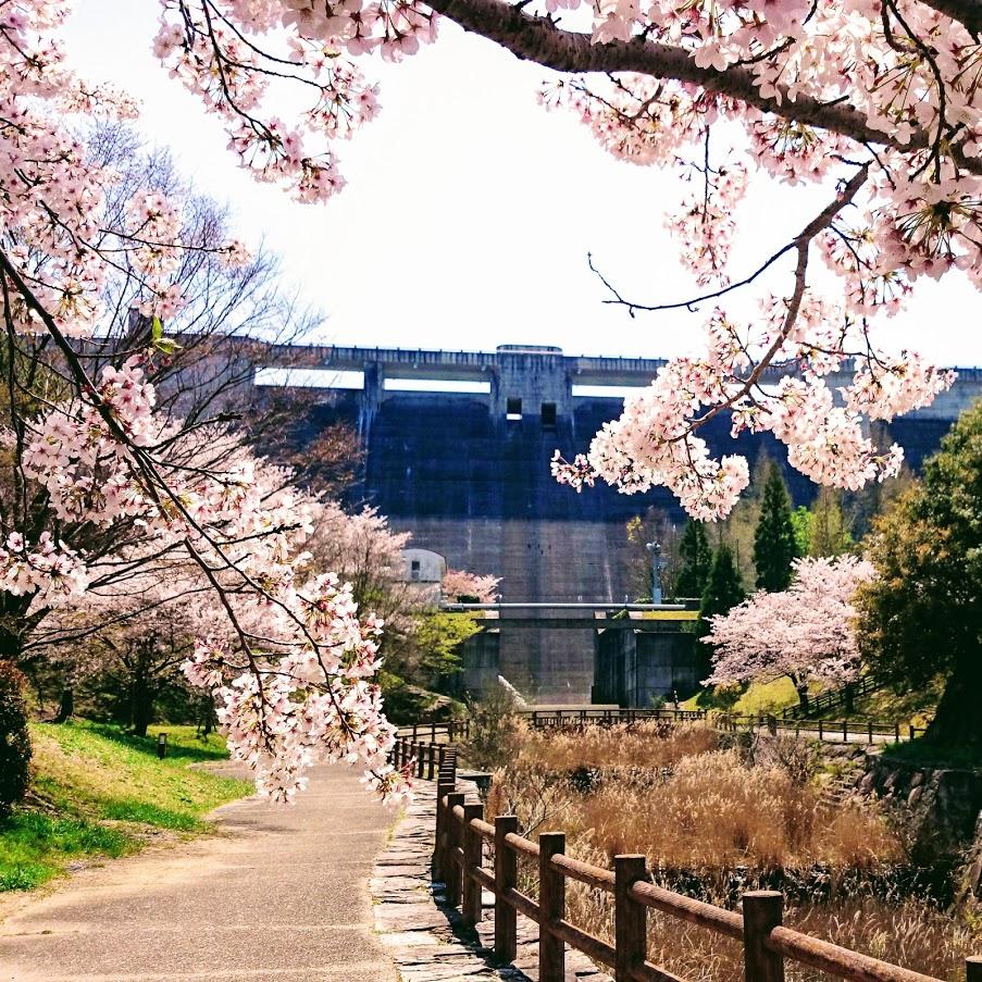 門入の郷の桜