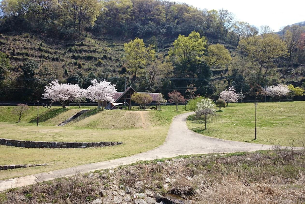 門入の郷水辺の公園キャンプ場西側から見る桜