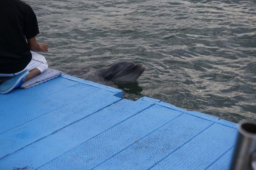日本ドルフィンセンター餌やり体験