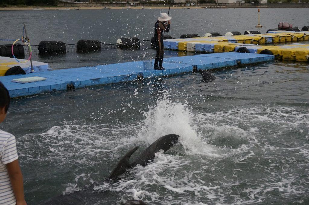 日本ドルフィンセンター餌やり体験水がかかる