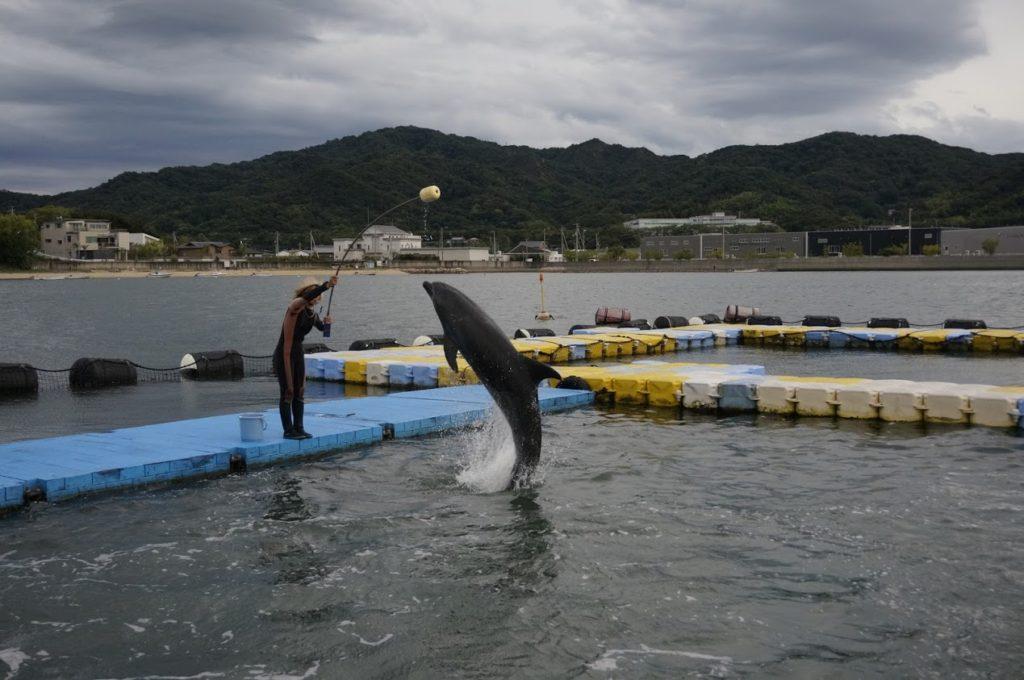日本ドルフィンセンター餌やり体験ジャンプの練習