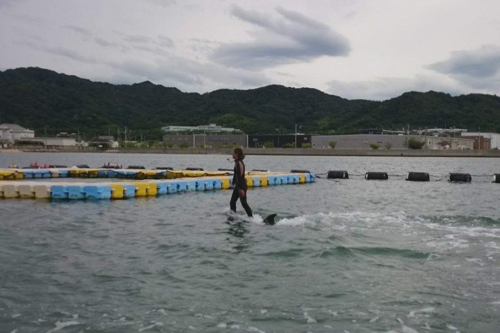 日本ドルフィンセンターイルカの背に乗る