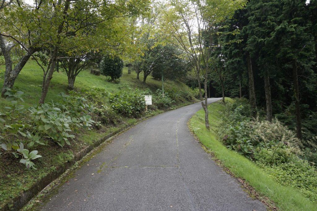 雲辺寺山頂公園への道