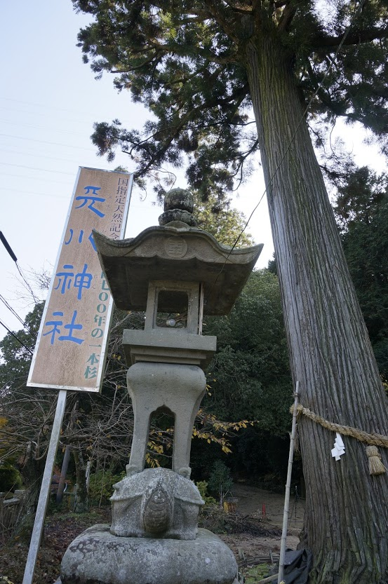 天川神社の杉