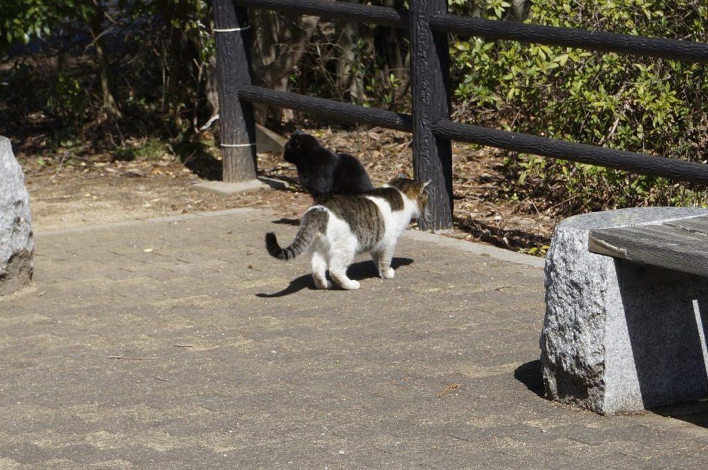 法然寺前に猫