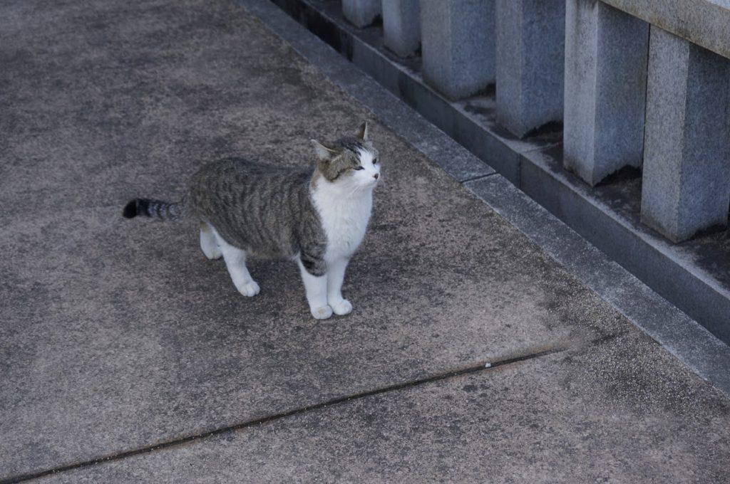 法然寺の猫