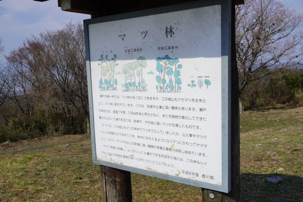 城山山頂園地のマツ林