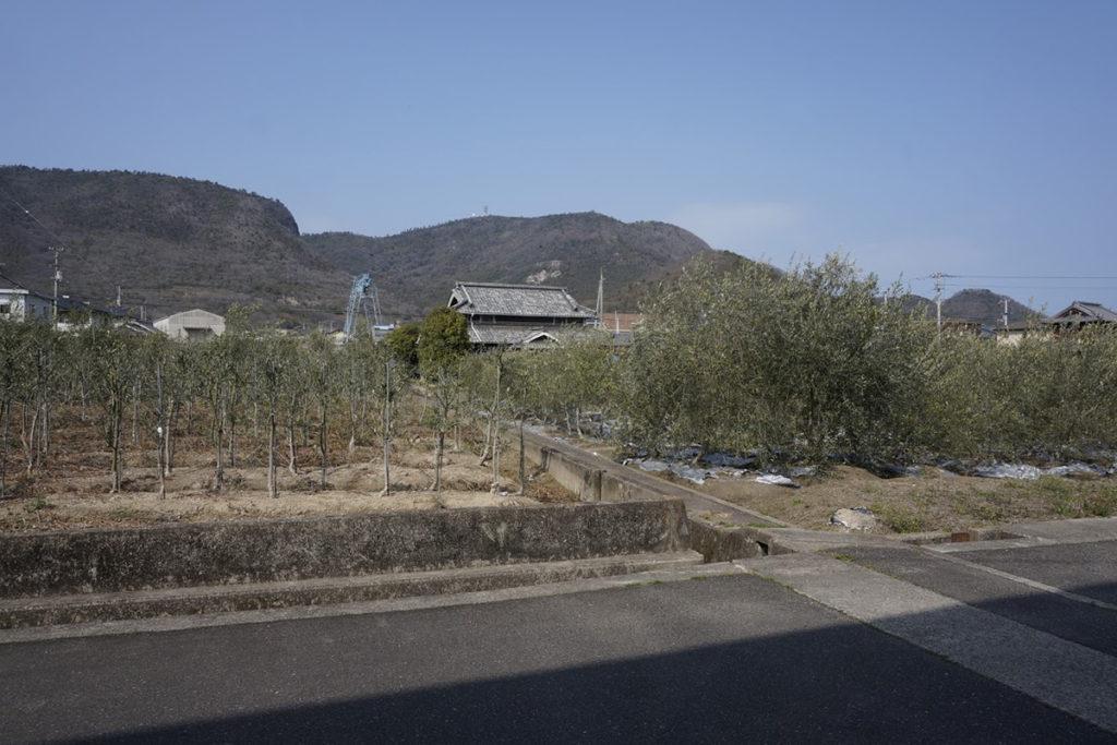 讃岐国分寺跡資料館から史跡公園までにオリーブ畑