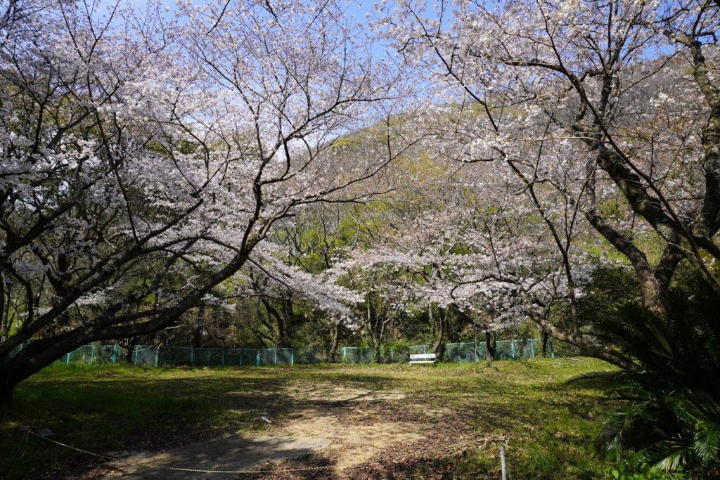 神谷神社奥に桜が見える