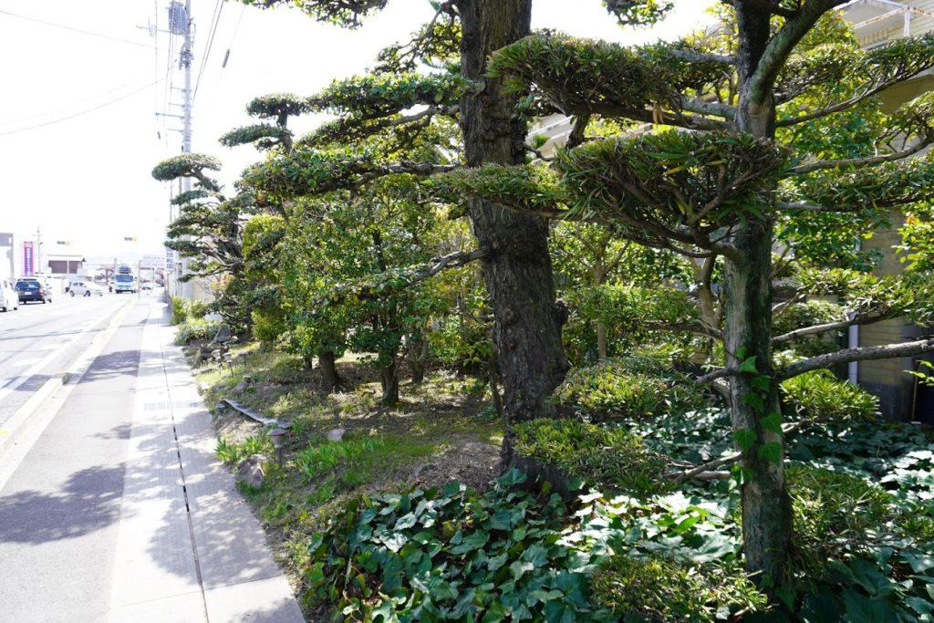 県道33号線沿いの植木