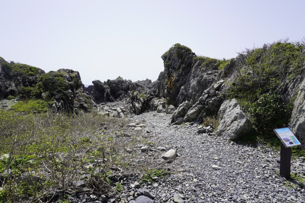 室戸岬海岸 タービダイト層