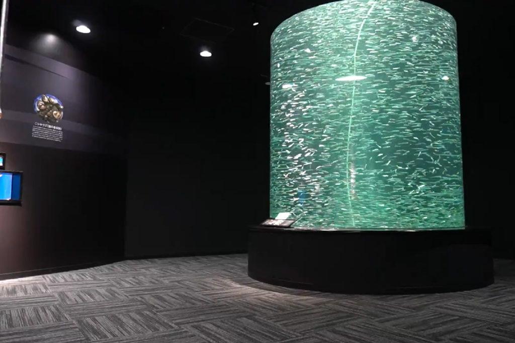 高知海洋館 イワシ水槽