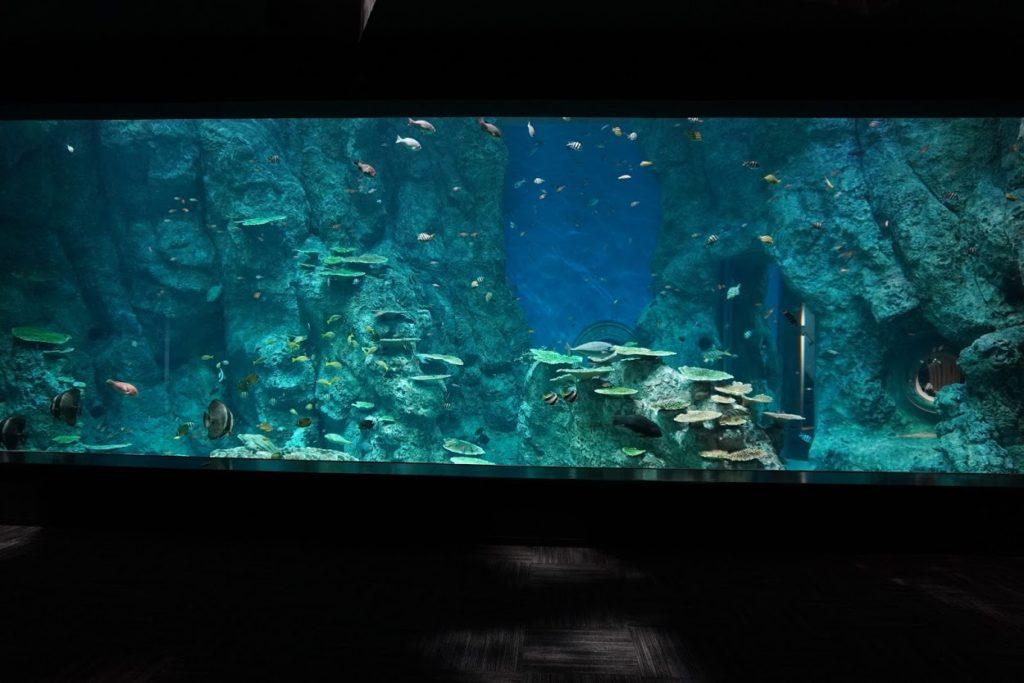 竜串湾大水槽の前
