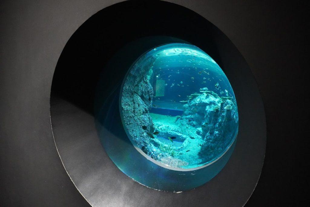 高知海洋館SATOUMI竜串湾大水槽