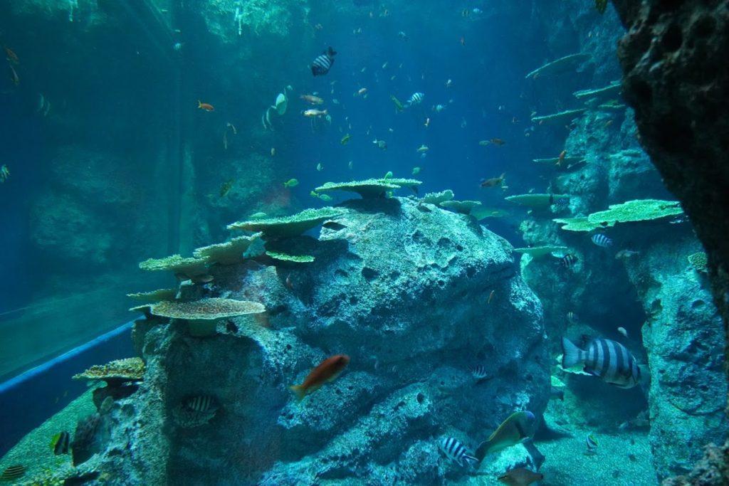 竜串湾大水槽の魚たち