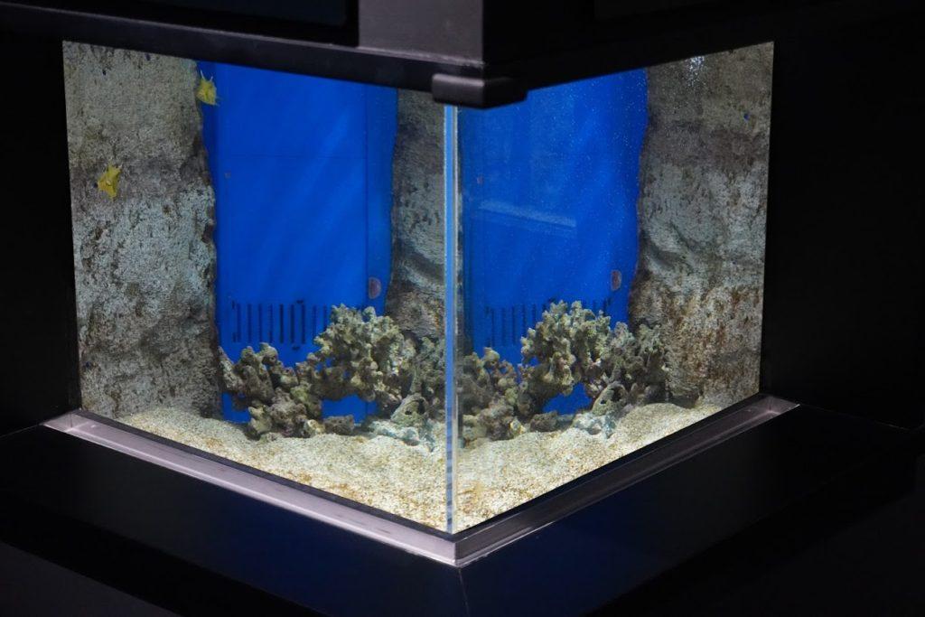 足摺の海 ゴマモンガラ