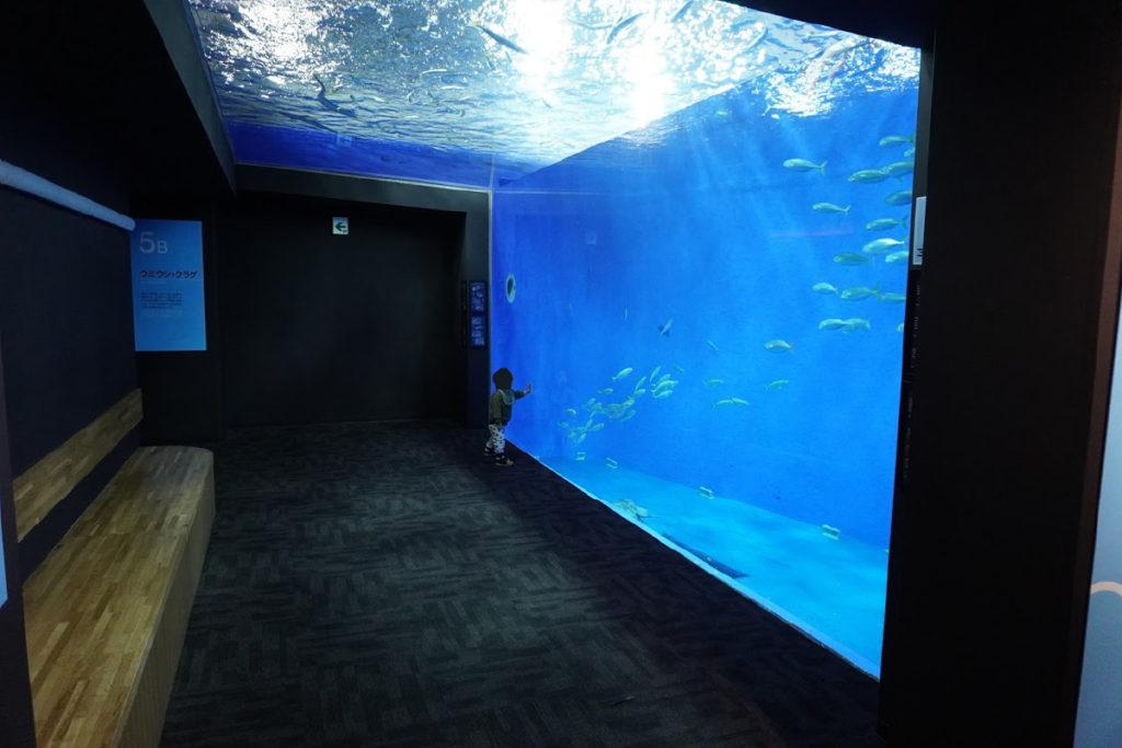 足摺海洋館外洋水槽