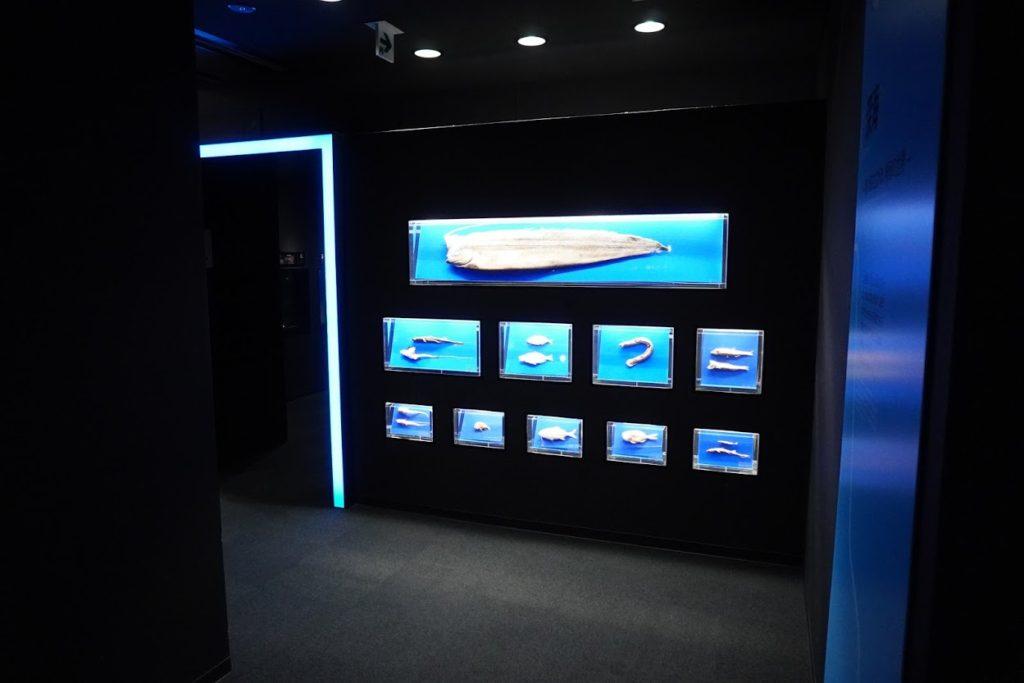 足摺海洋館 深海コーナーの入口