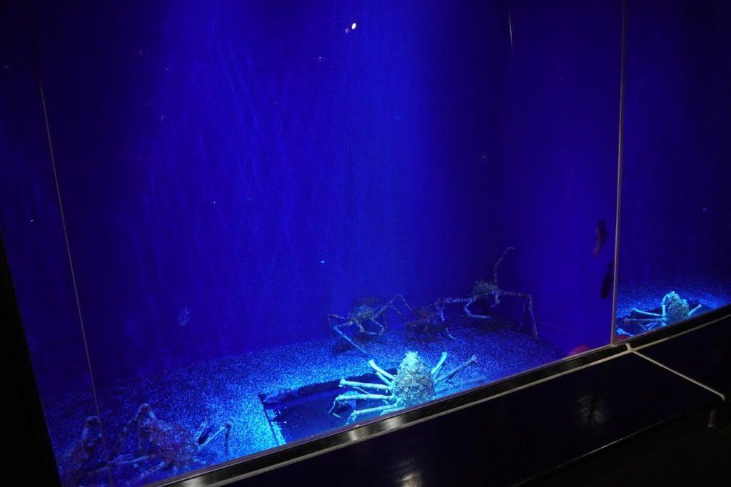 足摺海洋館 深海の水槽