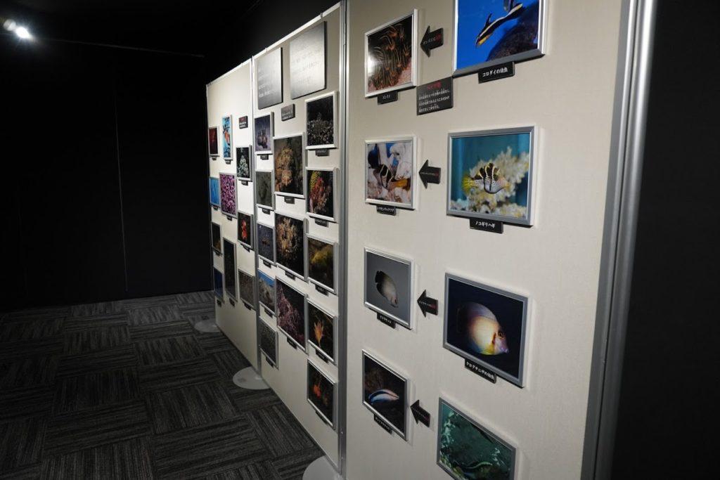 足摺海洋館 企画展示 騙し騙されの世界擬態展