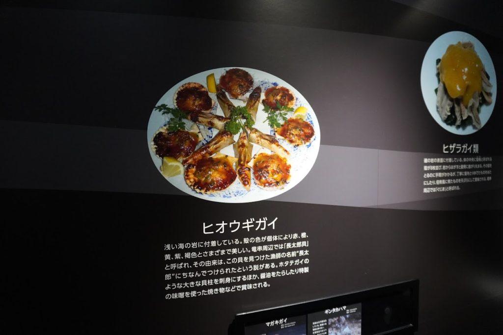 高知海洋館SATOUMI 黒潮の恵み