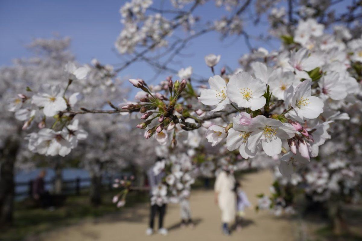 讃岐十景亀鶴公園
