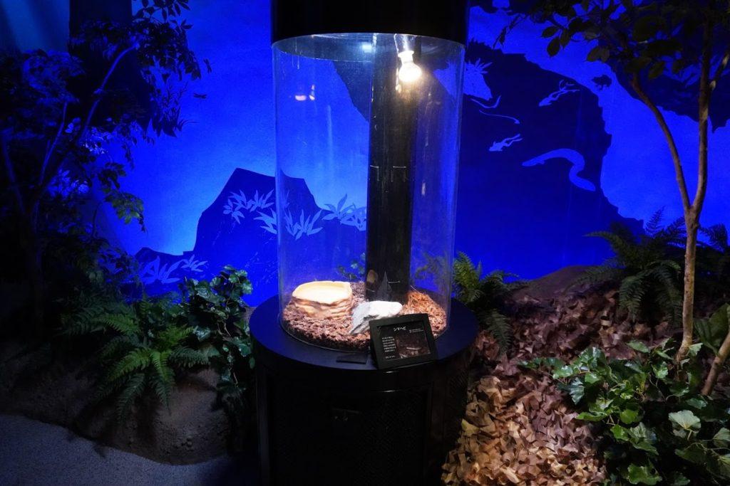 足摺海洋館SATOUMIシマヘビ