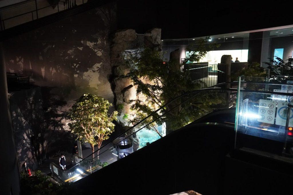 足摺海洋館SATOUMI二階へのエスカレーター