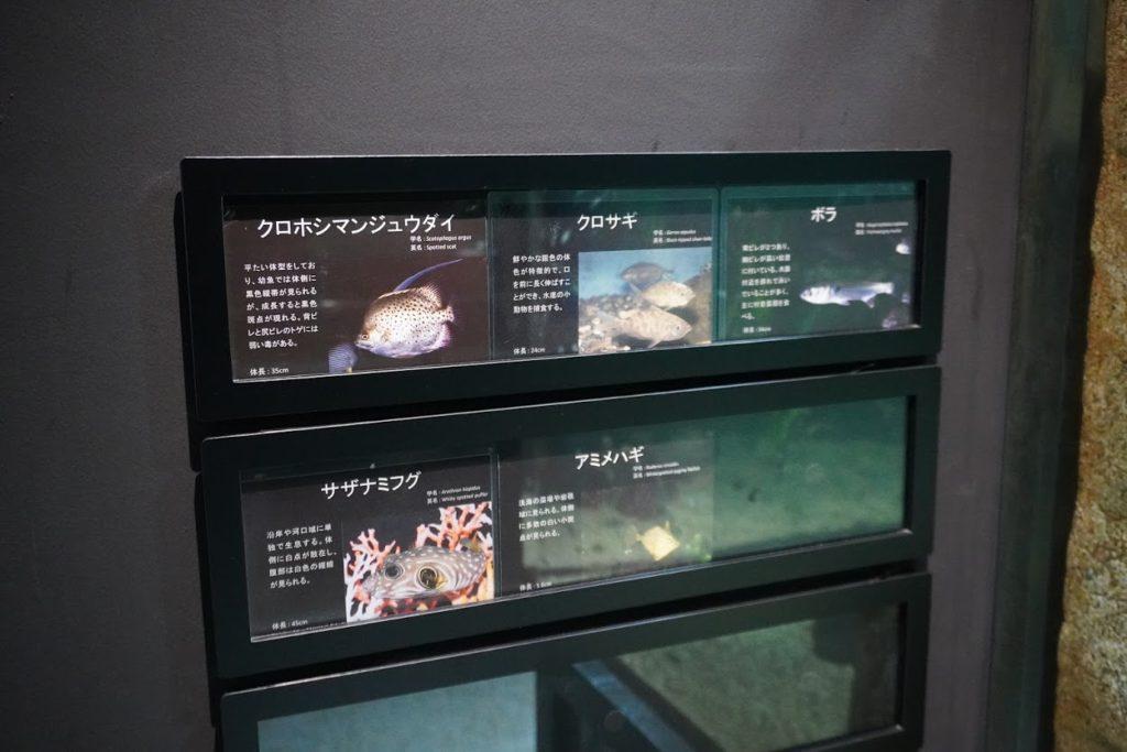 足摺海洋館SATOUMI 河口の展示